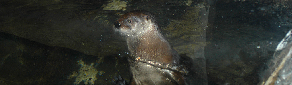 River Otter-Adjusted.jpg